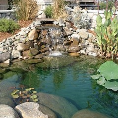 Leaking Fish Pond